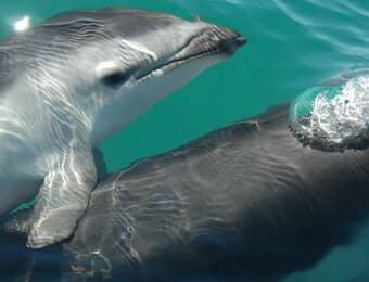 伊豆三津シーパラダイスのイルカの画像