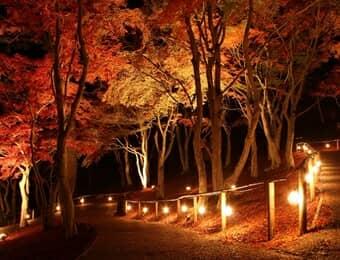 虹の郷の紅葉の画像