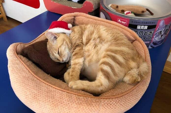 恋人岬と猫