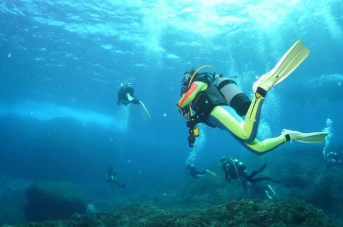 伊豆海洋公園のダイビングの画像