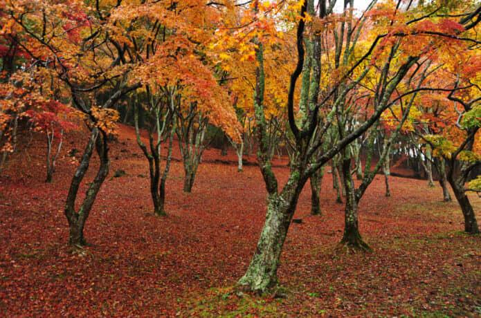 伊豆の紅葉スポット自然公園