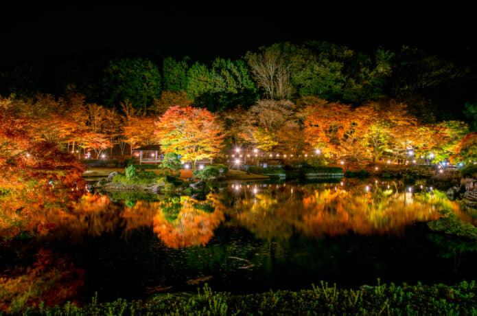 伊豆の紅葉と夜