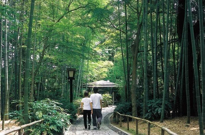 修善寺の竹林の小怪