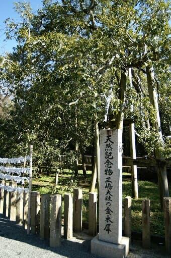 三嶋神社の金木犀