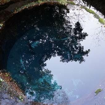 柿田川公園の水たまり