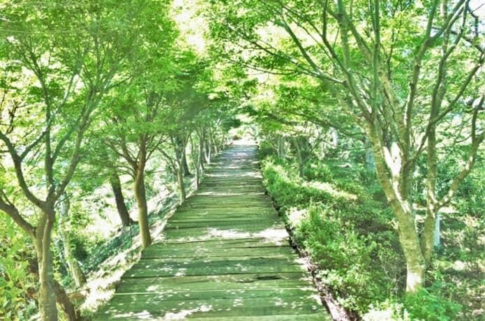伊豆の国パノラマパークの森林