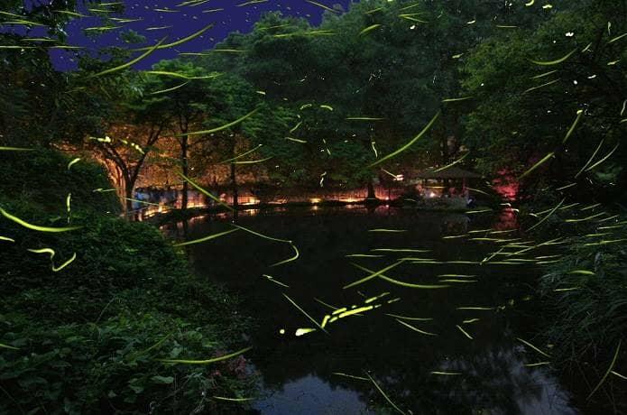 伊豆の竹ヶ沢公園