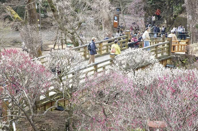 熱海梅園にかかる橋