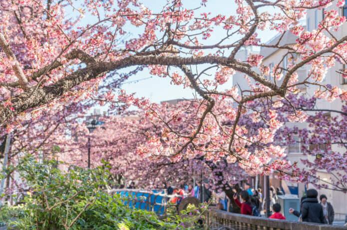 あたみ糸川桜祭り