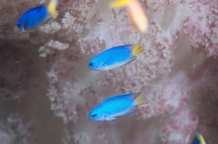 伊豆の海にすむ魚たち