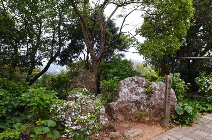石割り楠の画像