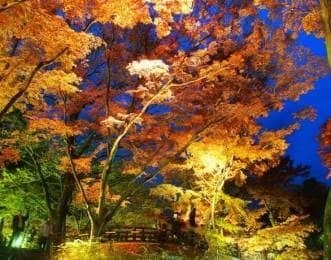 熱海梅園の紅葉の画像