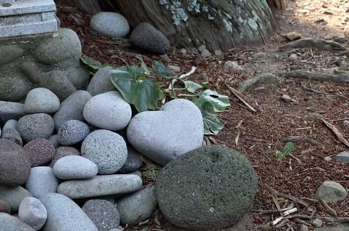 ビャクシン樹林とハート石
