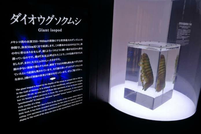 ダイオウグソクムシの骨格標本