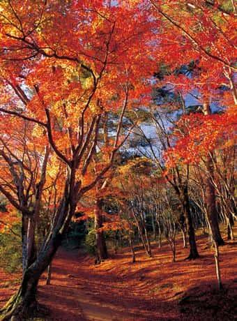 修善寺 自然公園もみじ林