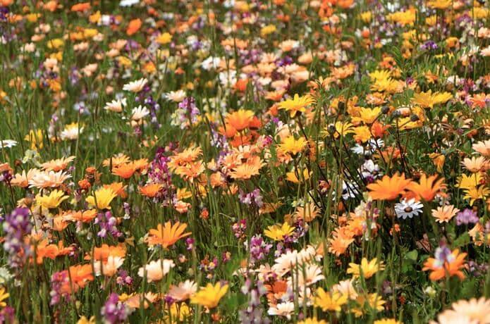 那賀川 花畑
