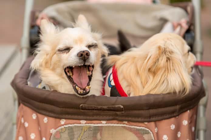 犬 カート イメージ