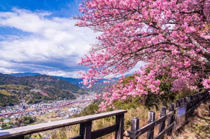 河津城址公園から見る桜景色