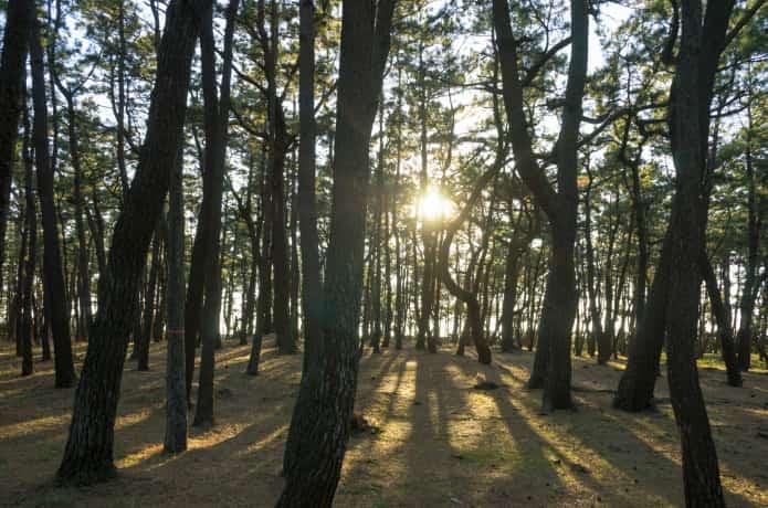 千本松公園と夕陽