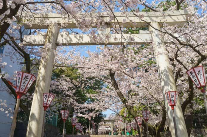 春の沼津日枝神社