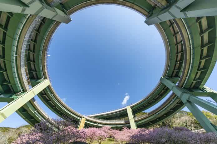 河津七滝ループ橋と桜