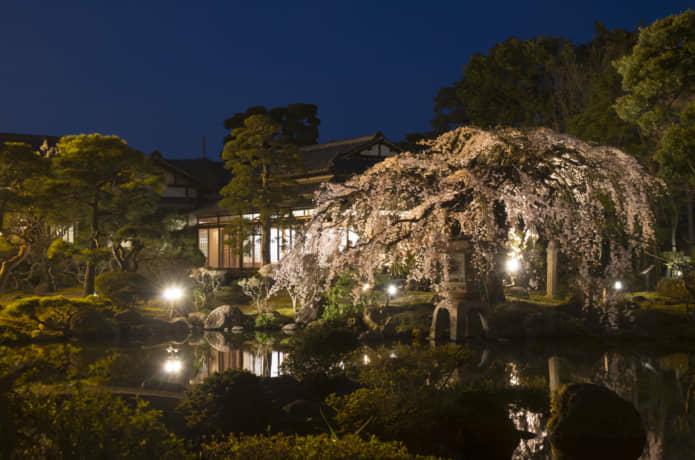 佐野美術館 しだれ桜のライトアップ