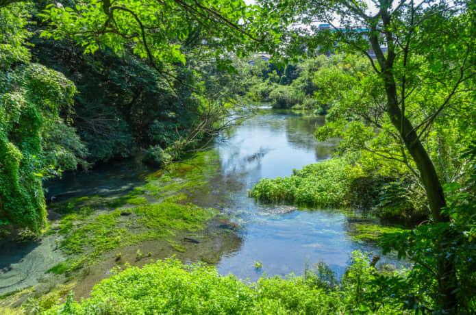 柿田川 展望台からの景色
