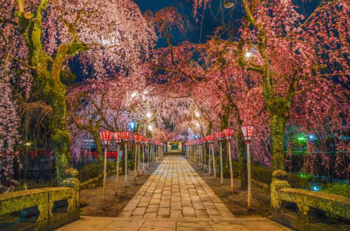 三嶋大社 夜桜