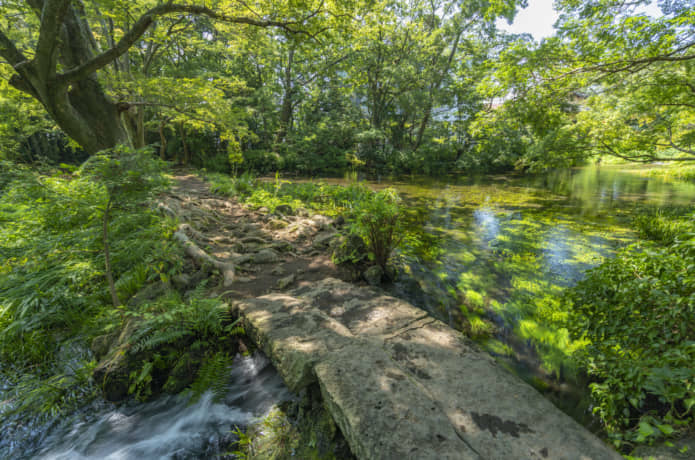 楽寿園 小浜池