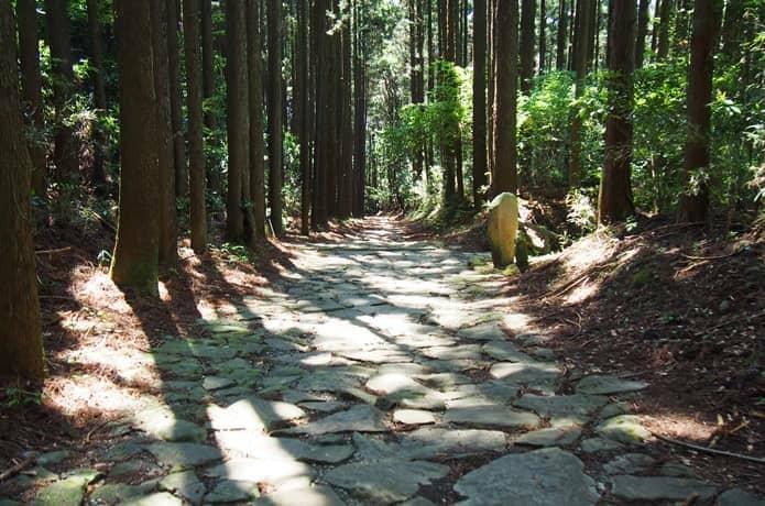 箱根旧街道 杉並木