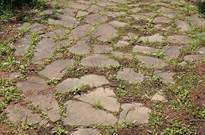 箱根旧街道 願合寺区 石畳