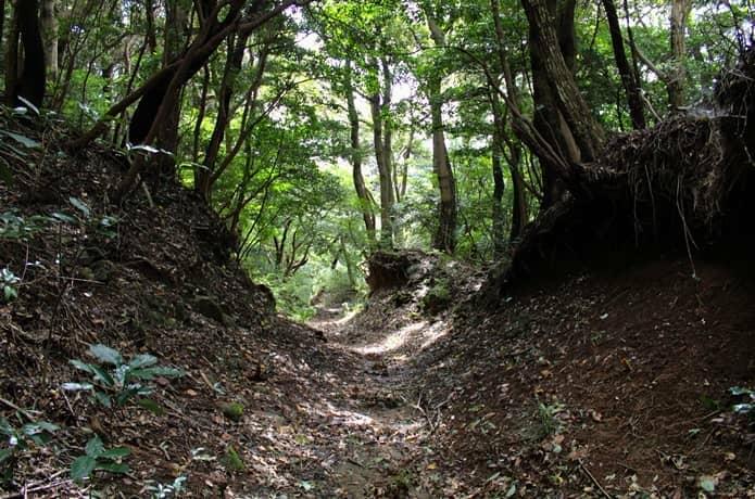 伊豆山恋の森ハイキングコース 下り坂